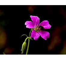 Foraging Bee #1 Photographic Print