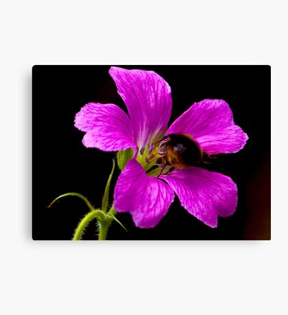 Foraging Bee a Closer View Canvas Print
