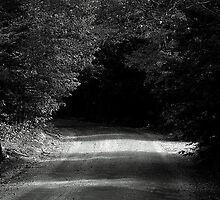 The woods are lovely, dark and deep by Patty Gross