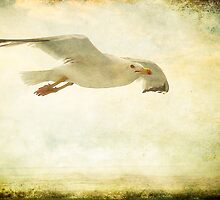 Just Fly  by EvaMarIza