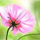 Pink Summer by AndreaFettweis