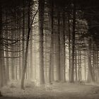 Monochrome forest II by LarsvandeGoor