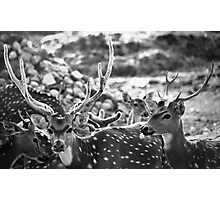 equipped for aggression; yet inherently calm... Photographic Print