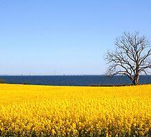 Lone tree by the sea (Denmark) by Trine