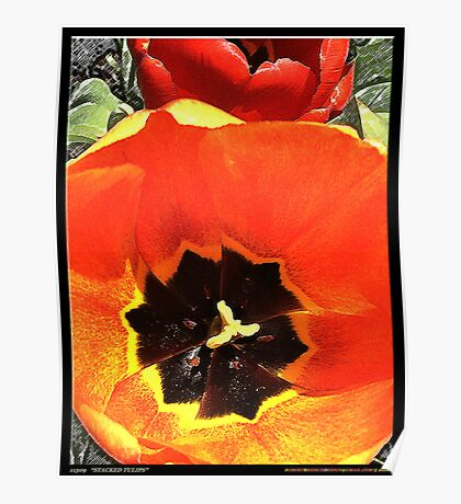 11309 Stacked Tulips Poster