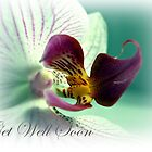 Phalaenopsis  Orchid Get Well Card by Aj Finan