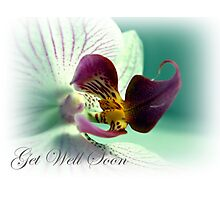 Phalaenopsis  Orchid Get Well Card Photographic Print