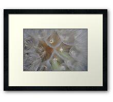 Softness ...  Framed Print