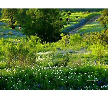 Springtime in Texas Photographic Print