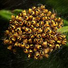 lots of baby spiders by Scott Thompson