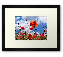 Backlit Poppy Framed Print