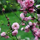 Garden Walk... by ciriva