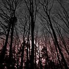 silent witness by www.romansolar photography.com