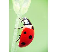 Mrs Bug Photographic Print