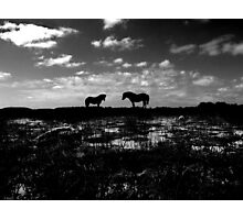 Black Beauties Photographic Print