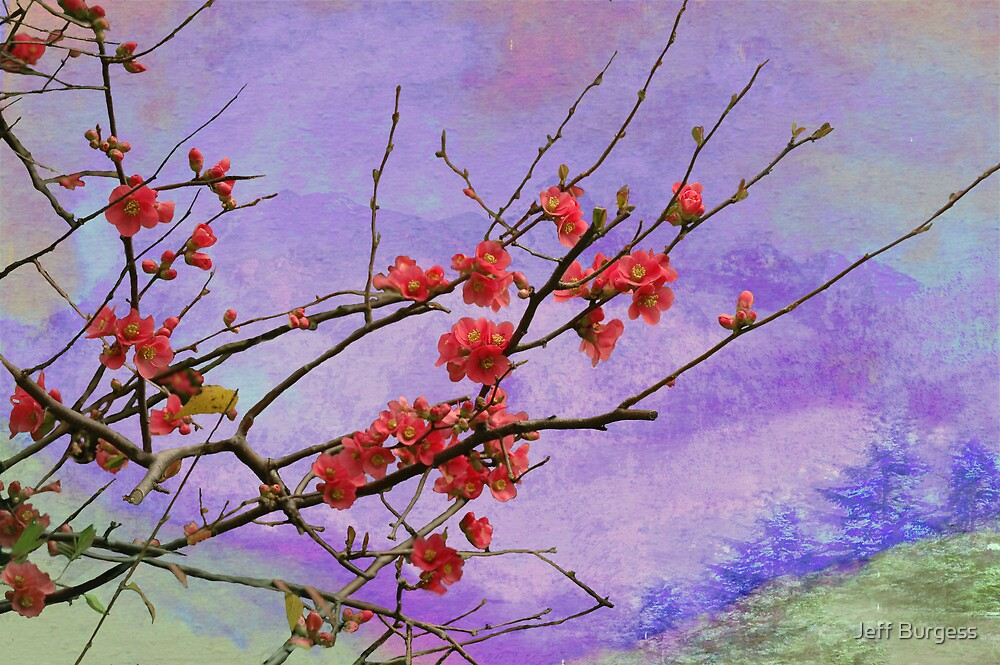 Quince in Washington by Jeff Burgess