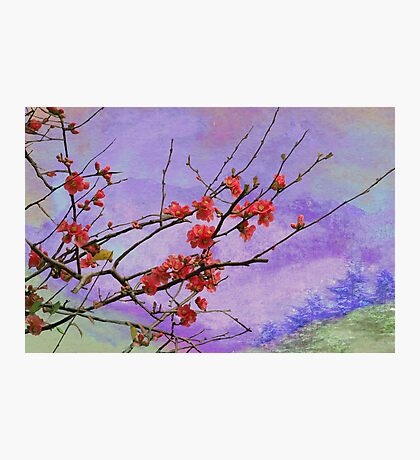 Quince in Washington Photographic Print