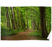 Sacred Grove Path Poster