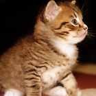 This little kitty stayed home by kimbo74