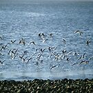 Seagulls taking flight by Connie  Danaher