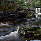 Knyvet Falls - Tasmania by Michael Treloar
