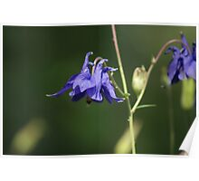 Faery Flowers Poster