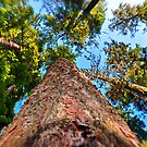 Look Up! by Bob Hortman