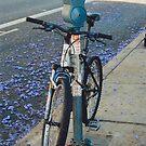 Don't take my bike . . . by PattyB46