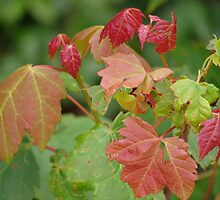 Who Says Leaves Aren't Colorful in the Spring? by vigor