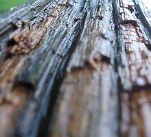 wet wood by takemeawaycn