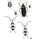Beetles by garts