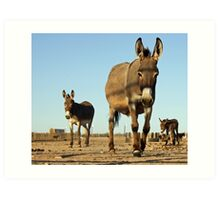 A Burro's Curiousity is Never Satisfied Art Print