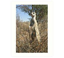 Meerkats in high places Art Print