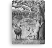 Possession - Leopard and Lions Canvas Print