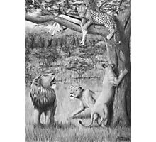 Possession - Leopard and Lions Photographic Print