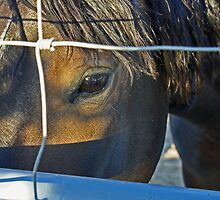 The Eyes are the Windows to a Wild Horse's Soul by Corri Gryting Gutzman