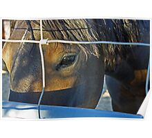 The Eyes are the Windows to a Wild Horse's Soul Poster