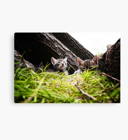 Kittens Canvas Print