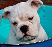 bucket of puppy by Meghann Clark