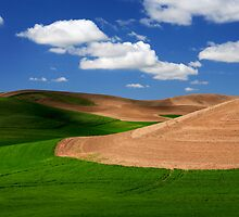 Palouse Field by Inge Johnsson