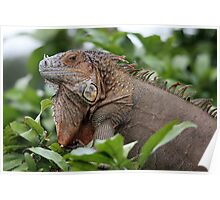 Iguana-Suit of Armour Poster