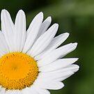 Daisy Sunshine by Scott Ruhs