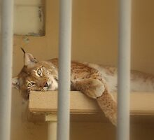 lazy day at the zoo by Meghann Clark