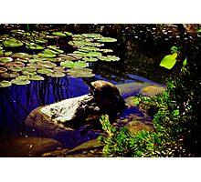 Koi Pond and Turtle  Photographic Print