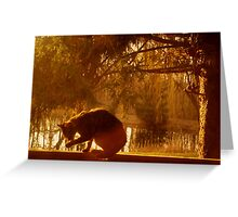 Morning Rays Of Sunlight Greeting Card