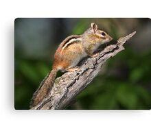 Outlook / Chipmunk Canvas Print