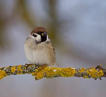 Not all Sparrows are made equal by Janika