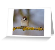 Not all Sparrows are made equal Greeting Card