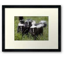 Oh Cool...Baby Black And White Foxes :-)  Framed Print