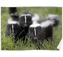 Oh Cool...Baby Black And White Foxes :-)  Poster